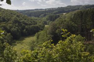 Hier gehts zum Gemeindewald